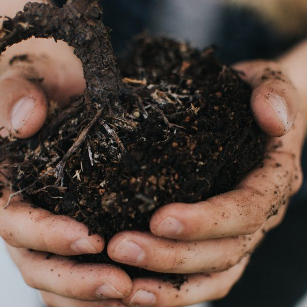 Hands holding dirt and plant root